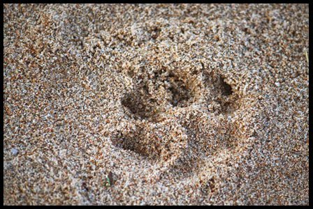 paw print with frame