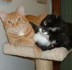 Alfie and Singe