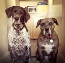 Hank & Abby