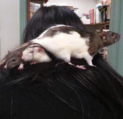 Fiona, Macy, Fritz